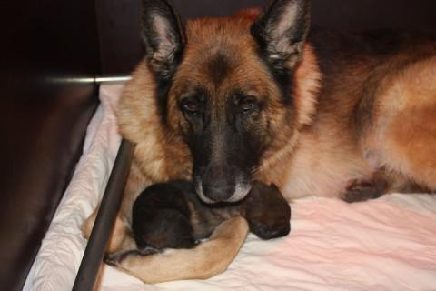 pupje 2 weken oud