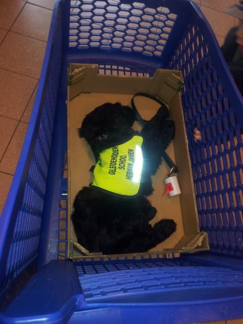bink in het supermarkt karretje