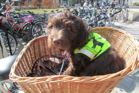 polly in de fietsmand