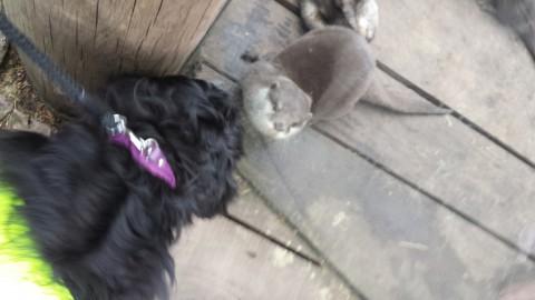 bink versus otter