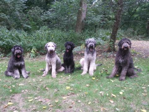 van links naar rechts pleun, rasta, maggie, baco, jackson