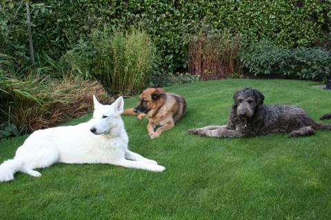 van links naar rechts, Kyara ex geleidehond, kevin, ex geleidehond en jackson huidige geleidehond