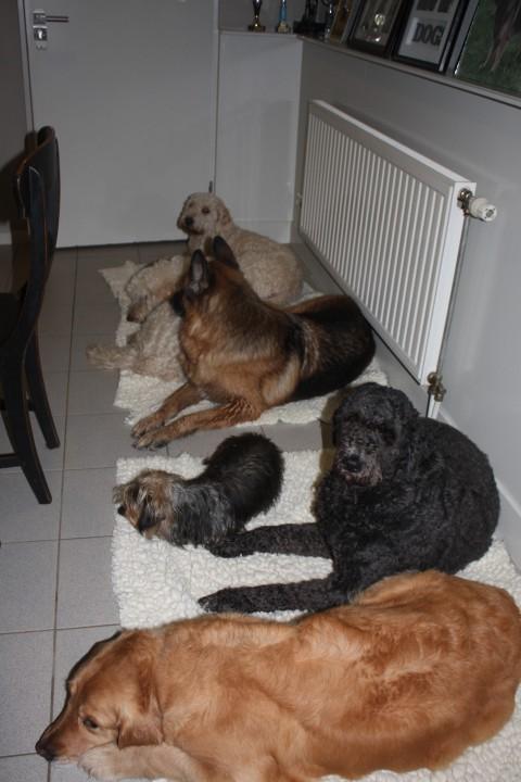 en wanneer mogen wij nou eens bij de pups kijken, weet je al hoe lang wij zo netjes wachten??