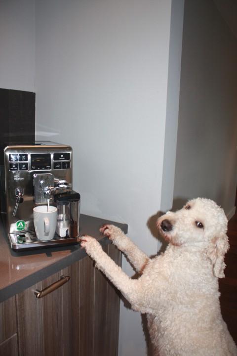 nemen we nog een bakkie koffie voordat ik ga bevallen??