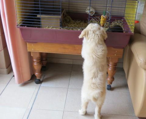 en wat zit daar in?? konijn, cavia, ik kan het net niet goed zien!!