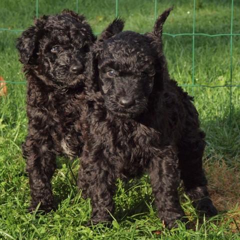 pups fenja c