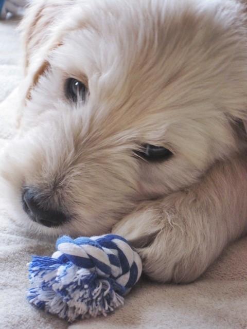 als pup