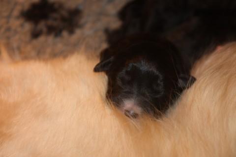 en een klein zwart koppie met een klein wit neusje