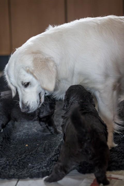 dot neemt het op tegen 2 pups