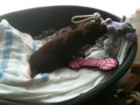 lizzy heerlijk slapen en nieuwschierig naar al haar nieuwe spreeltjese