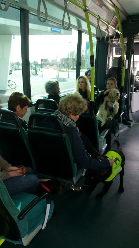 met de bus en de trein