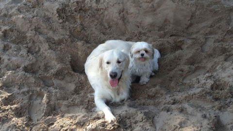 Milo met zijn beste vriend