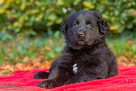 pups-celine-c